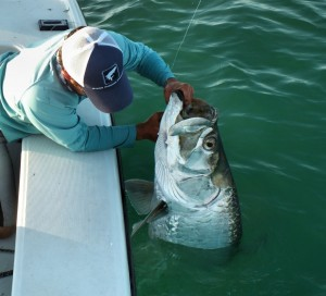 Tarpon Report – Tarpon Have Made Their Way to Sanibel!