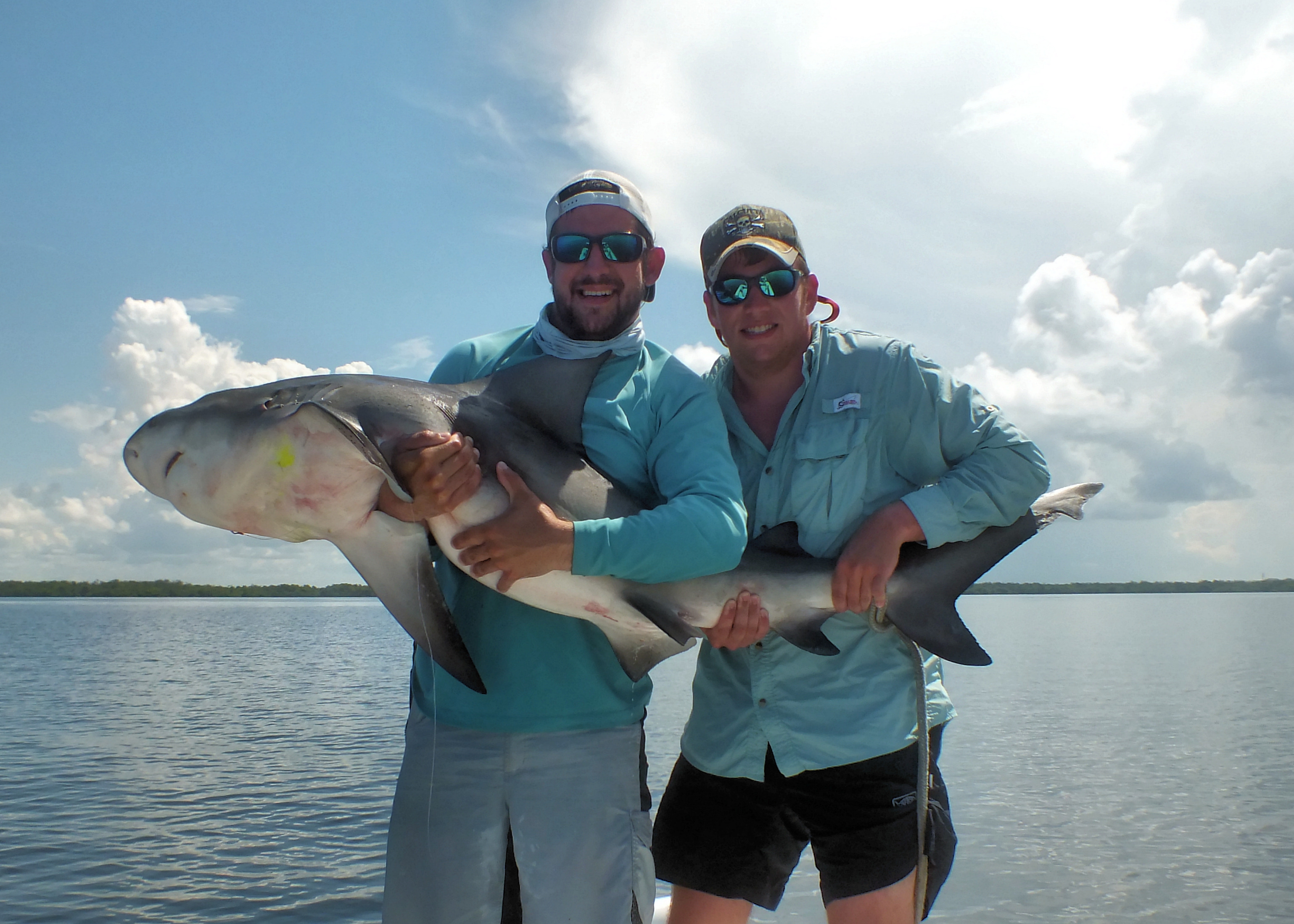 Sanibel island fishing shark sanibel fishing charters for Sanibel island fishing charters