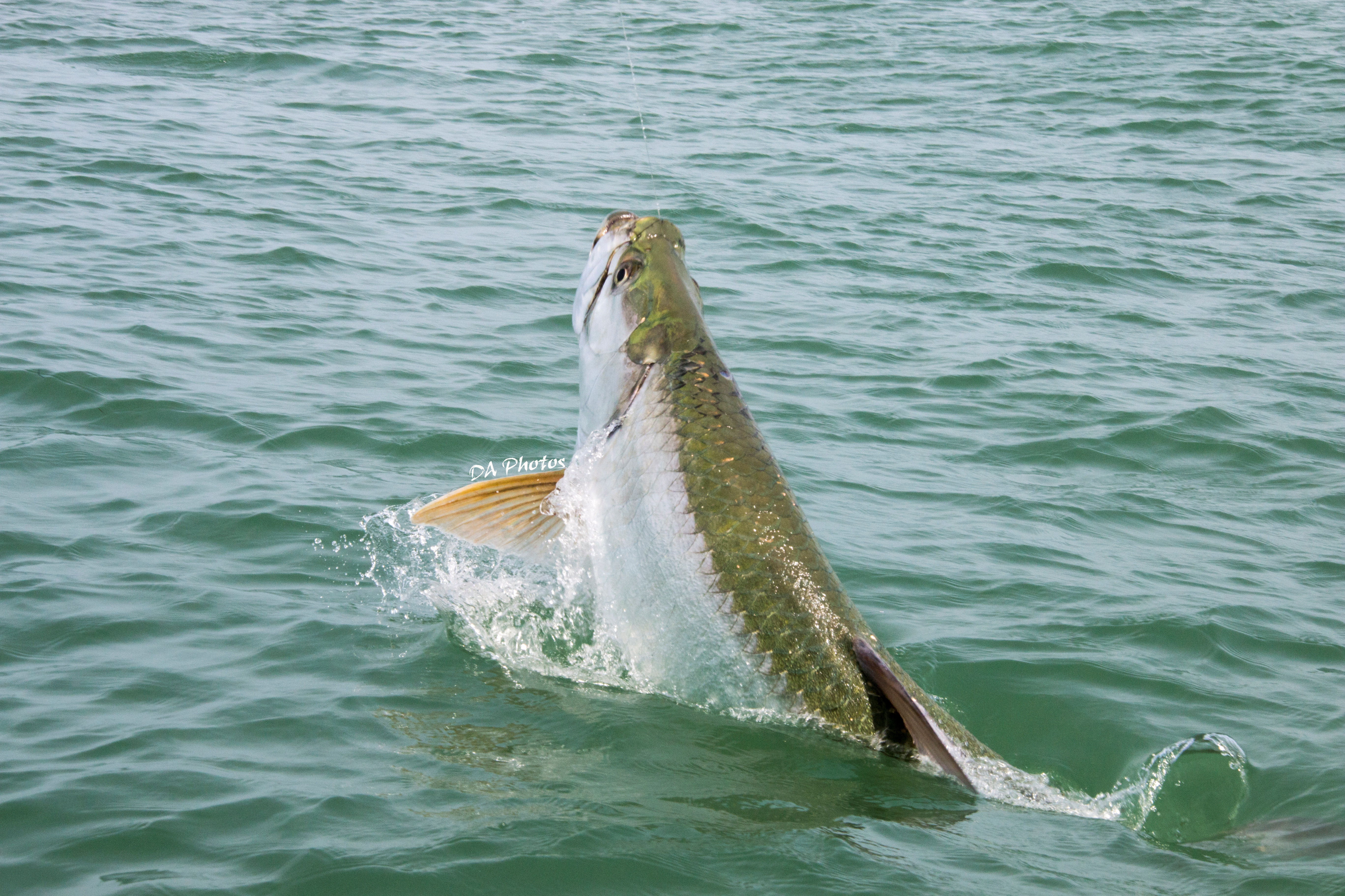 Fishing charters sanibel for Sanibel island fishing charters
