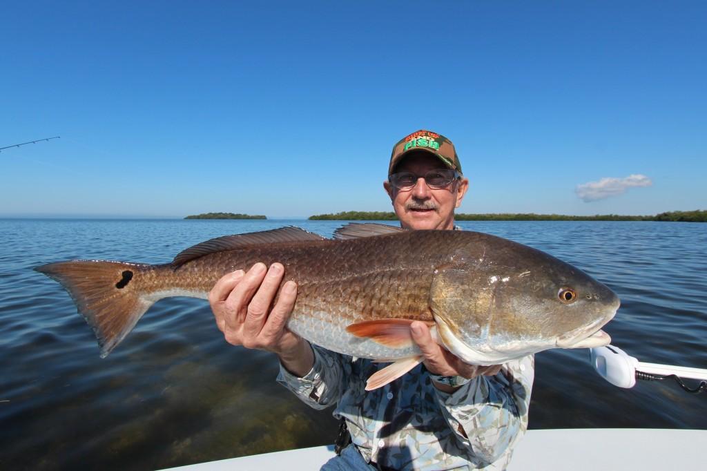 Redfish sanibel fishing charters for Sanibel fishing charters