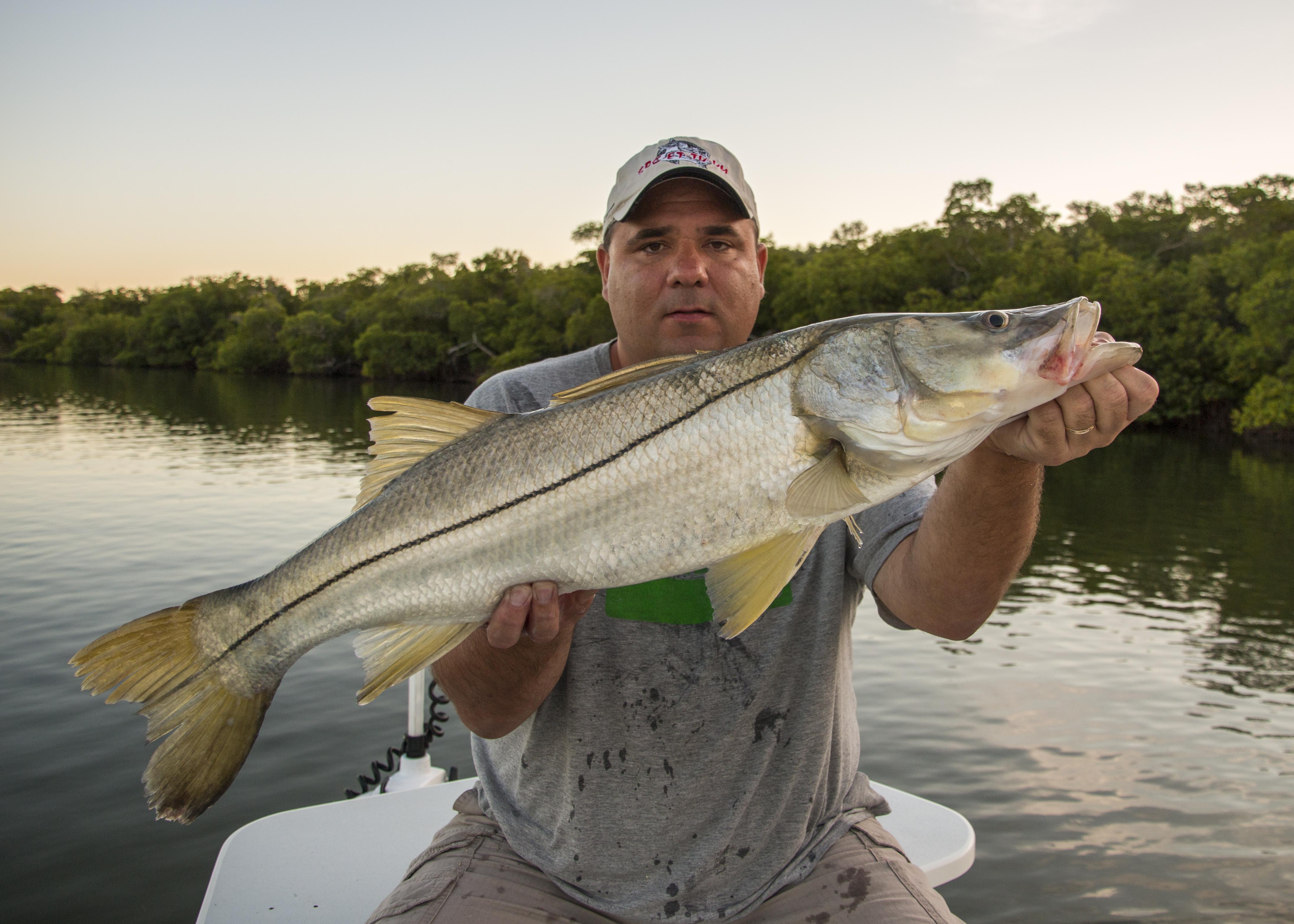 Awesome fishing on sanibel fishing charters sanibel for Fishing for snook