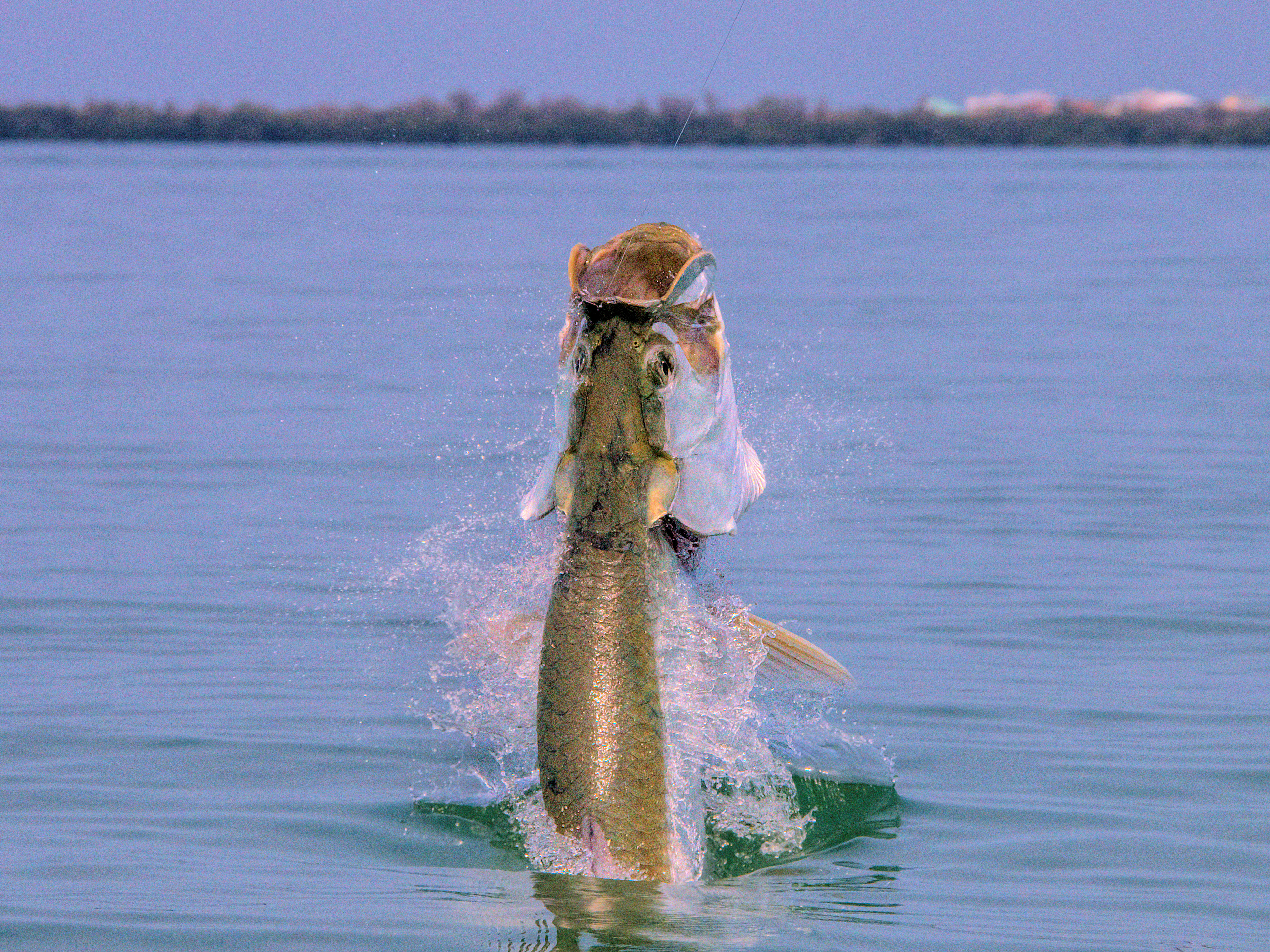 Sanibel island fishing charters sanibel fishing charters for Tarpon fishing charters